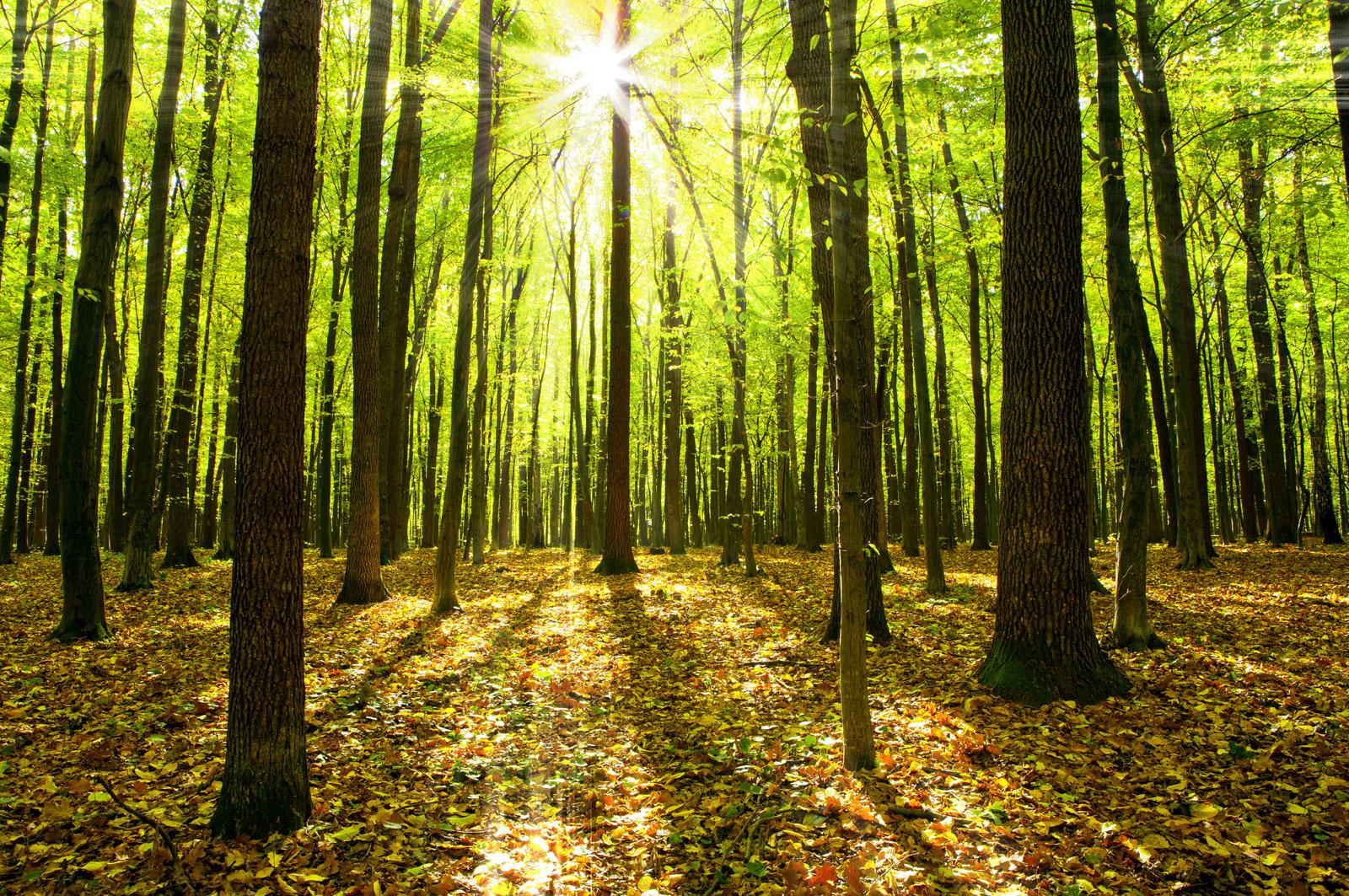 Teak Hardwoods Plantation